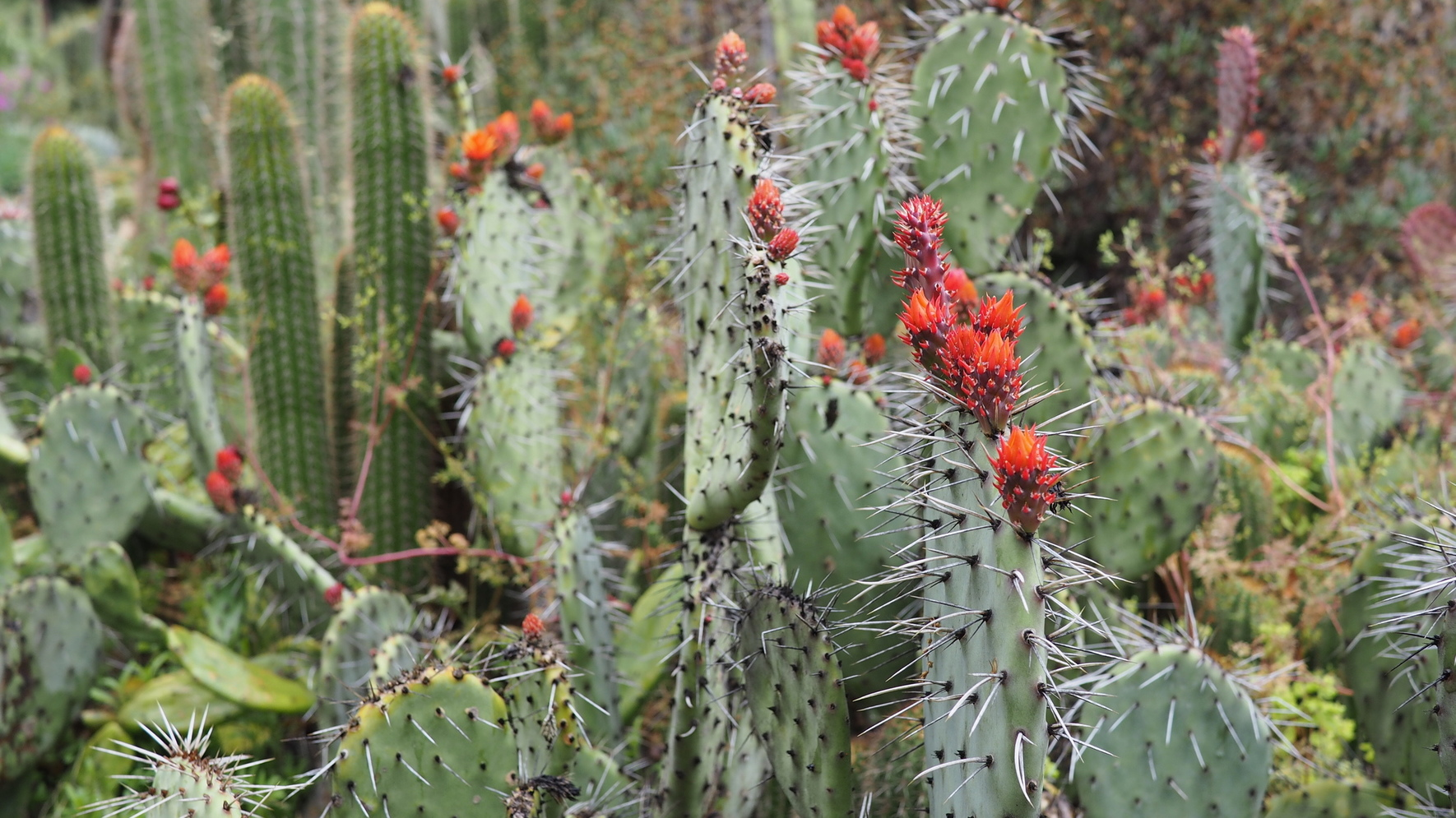 Fortunately, I Got Tips To Visit The Cactus Garden And The Stone River  Sculpture, Both Of Which I Recommend Very Highly As Quiet, Beautiful, ...